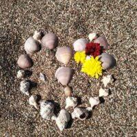 Сердце море    Морские ракушки