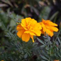 Чудесные цветы 🌻